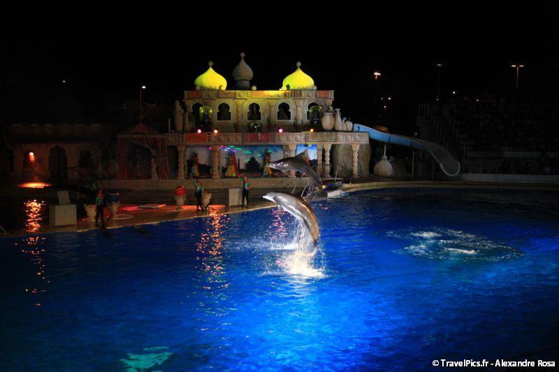Marineland rencontre avec les dauphins video